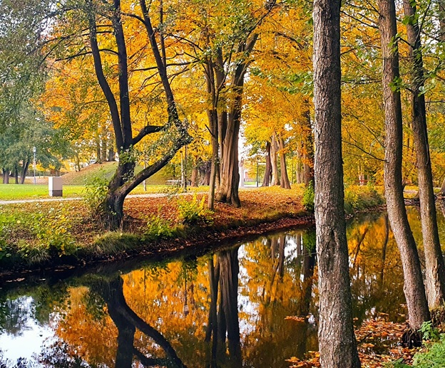 OLD TREES AND THEIR REFLECTION IN STILL, DARK WATER. GOLDEN POLISH AUTUMN.